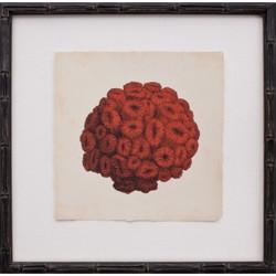 Mini Red Coral I