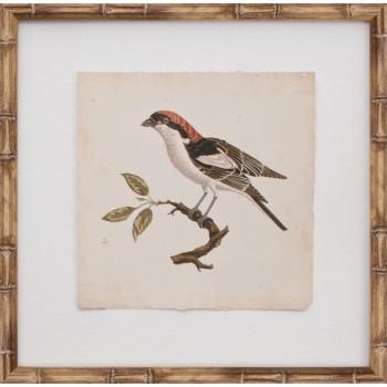 Mini Nozeman Bird I