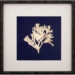 Gold Leaf Kelp on Navy Paper I