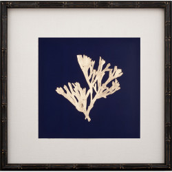 Gold Leaf Kelp on Navy Paper II