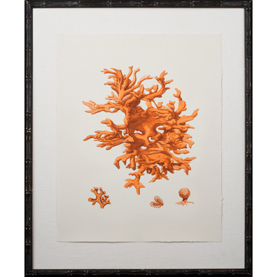 Tangerine Coral Giclee I