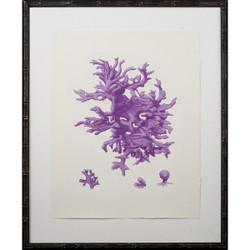Purple Coral Giclee I