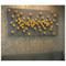 Seed Wall Play - Gold - Set of 20 image 5