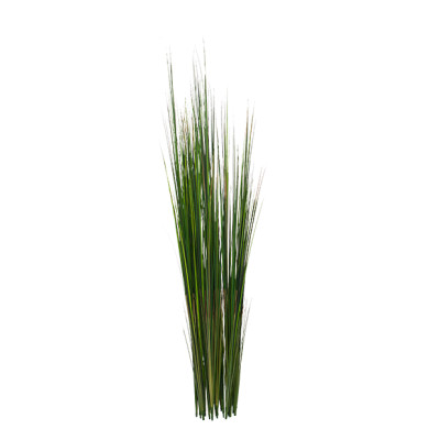"Onion Grass - 50""green,UNPOTTED - Set of 2"