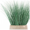 Bear Grass in Urbano Bell Fiber Clay Planter - LARGE image 1