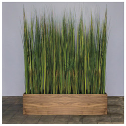 Tall Onion Grass in Custom Rectangle Planter