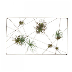 Intersect Wall Art with Tillandsia Mix