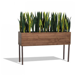 Short Sansevieria Mix in Custom Rectangle Planter