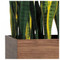 Short Sansevieria Mix in Custom Rectangle Planter image 1