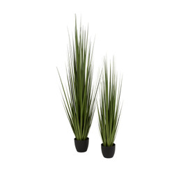 Potted Century Grass