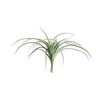 Tillandsia - Grey - Set of 6