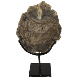 Wood Fossil w/ Stand - 8""