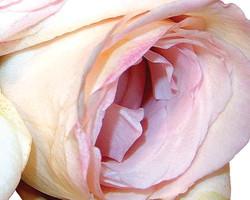 Art Classics Pop Art Florals 1