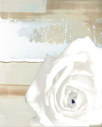 Art Classics White Rose on Neutral Abstract