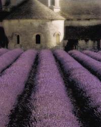 Art Classics Lavender Abbey