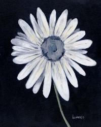 Art Classics Daisy