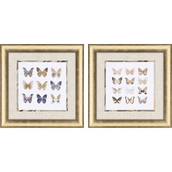 Paragon Butterfly Study Pk/2
