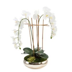 John Richard Structured Phalaenopsis