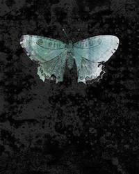 Art Classics Blue Wings Moth