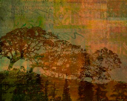 Art Classics Shadow of Trees Four