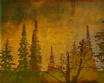 Art Classics Shadow of Trees One