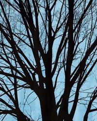 Art Classics Tree Poetry Center