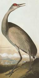 Art Classics Hooping Crane