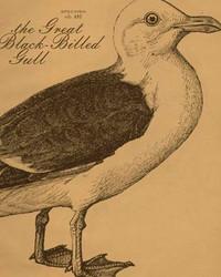 Art Classics Gull Etching
