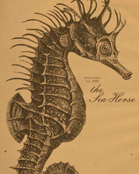 Art Classics Sea Horse Etching