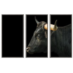 Black Longhorn Sideview (Set of 3- 24 x 48)