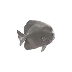 Phillips Collection Australian Batfish, Polished Aluminum