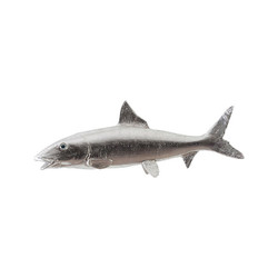 Phillips Collection Bonefish, Silver Leaf