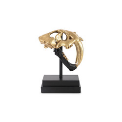 Phillips Collection Saber Tooth Tiger Skull, Black, Gold Leaf