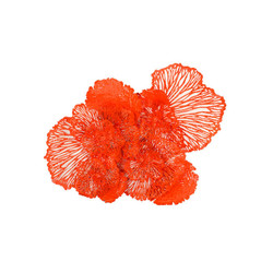 Phillips Collection Flower Wall Art, Coral, LG
