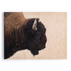 """Four Hands American Bison - Maple Box 60""""X40"""""""
