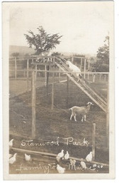 Farmington, Maine Real Photo Postcard:  Animals at Stanwood Park