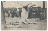 Dayton, Ohio Postcard:  Hung Horse Caused by 1913 Flood