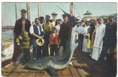 Block Island, Rhode Island Postcard:  Twelve Foot Shark