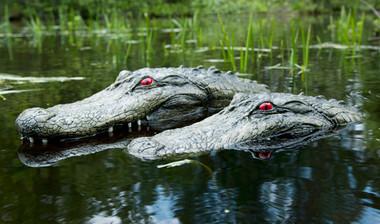 Floating Alligator Predator Decoy for Pond & Water Gardens