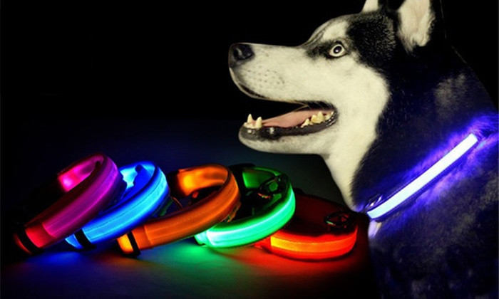 Dog Collar with LED Safety Lights - www.internationalcommoditiesbrokers.com