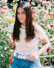 This is an image of 240937 Ali Macgraw Photograph & Poster