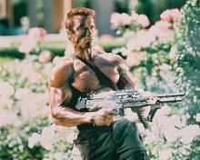 This is an image of 219682 Arnold Schwarzenegger Photograph & Poster