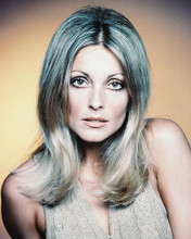 This is an image of 235204 Sharon Tate Photograph & Poster