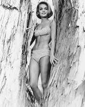 This is an image of 170288 Dyan Cannon Photograph & Poster