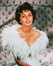 This is an image of 243408 Sophia Loren Photograph & Poster