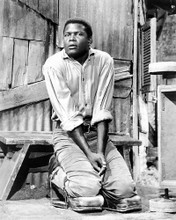 This is an image of 180089 Sidney Poitier Photograph & Poster