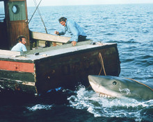 This is an image of 269131 Jaws Photograph & Poster
