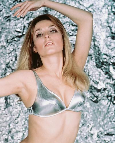 This is an image of 238568 Sharon Tate Photograph & Poster