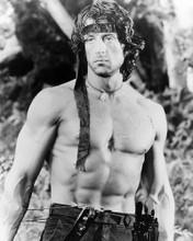 This is an image of Photograph & Poster of Sylvester Stallone 195021