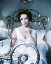 This is an image of Photograph & Poster of Elizabeth Taylor 284953